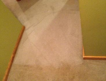 Bedroom Carpet During (Top Half Cleaned, Bottom Untouched)